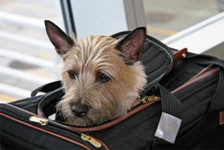 dog-in-travel-bag-airport-horiz